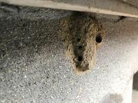 こんにちは! すみません!至急お願いします(>人<;) 今、庭のベランダの下の方に、写真の巣を発見したのですが、これは何の巣なんでしょうか? ハチかなと思うのですが、巣でどのハチか分かる方いらっしゃいます...