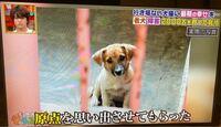 [坂上どうぶつ王国]僕は番組を見て、動物保護センター(動物保護施設)は基本的には関係者以外立入禁止なのか? また、動物保護センターで勝手に犬を撮影してもいいのか? 文章が変だと思いますがよろしくお願いします。  ↓写真は坂上どうぶつ王国の檻の中の犬です。