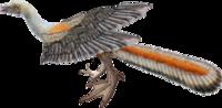 今突然電柱に変わった鳥が来たので写真加工してそいつを再現してみました。この鳥はなんですか?名前を教えて下さい。