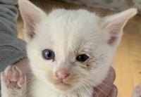 捨て猫を拾いました、子猫です。 右目に目ヤニがついててるのですが、これは猫風邪ですか?