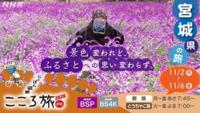火野正平のこころ旅の番組で、11月3日放送でオープニングの時にいた場所に咲いていた花は何ですか?