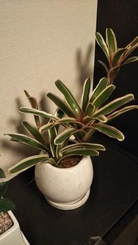 この植物の名前分かりますか?