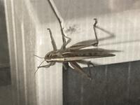 ベランダにいる虫の種類がわからず困っています。害のある虫なのでしょうか?