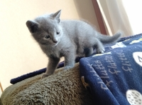 猫を飼う事の恐怖は何ですか? いい歳したおっさんやオバさんがいきなり幼児言葉になったり、ニャーニャー言い出したり、語尾がニャンになったり…