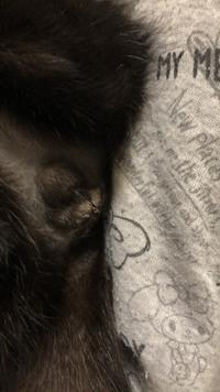 先日、雄猫の去勢手術をしてきました。 手術痕がやや白っぽくなっているのですが、病院へ連れて行った方が良いのでしょうか?それとも正常でしょうか?