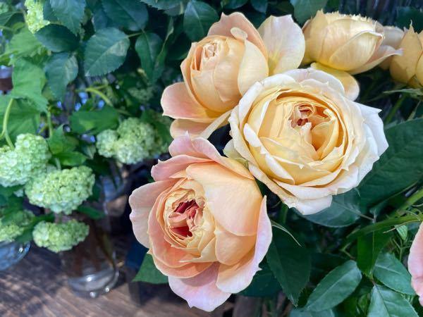 お世話になります。 画像のバラのお名前は何ですか? 詳しい方教えて下さい。 宜しくお願い致します。