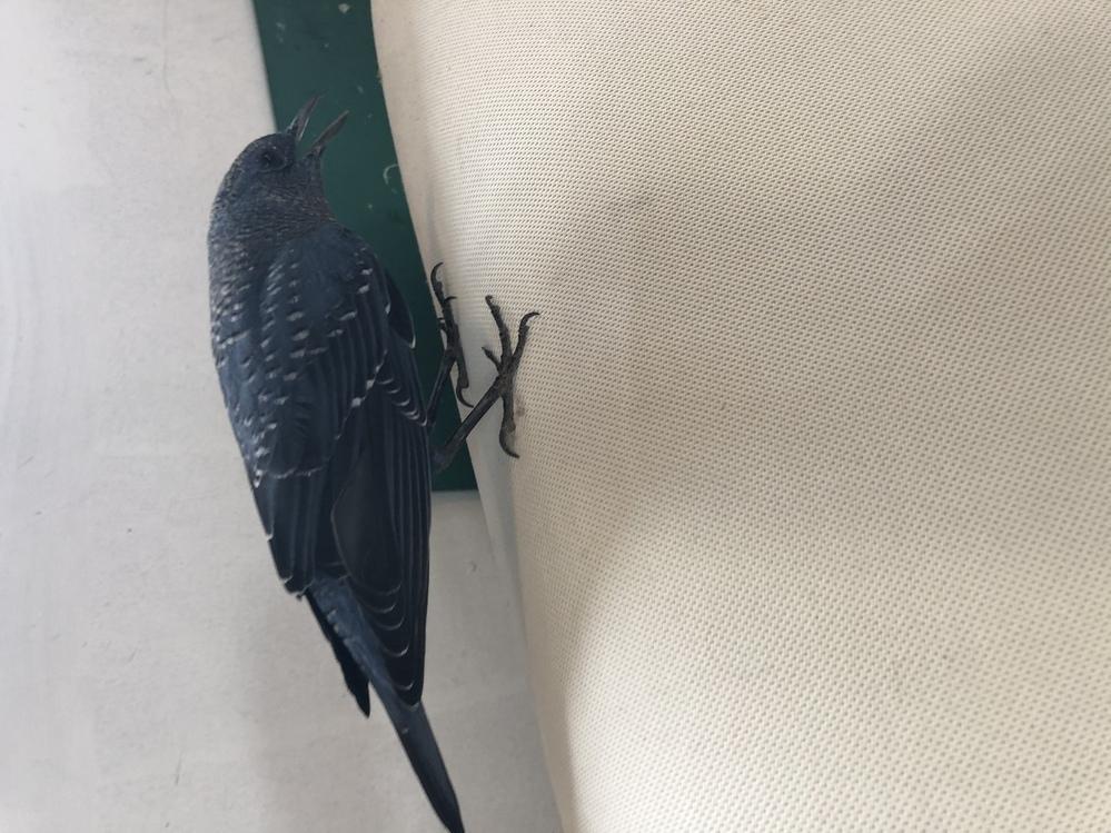 この鳥の種類と名前を教えてください!