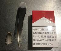 鳥の羽根の種類 写真の羽根について 鳥の種類が分かる方、ご教示ください。  福岡県で、今月それぞれ別日に採集したものです。