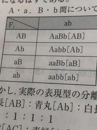 [AB]のように表されてるのが表現型 表現型の左に表されてるAaBbが遺伝子型 であってますか?