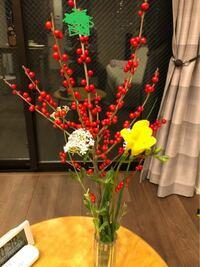 花は窓越しでも光合成しますか?