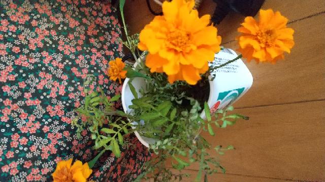 この花の名前 ご存知の方教えて下さい。!