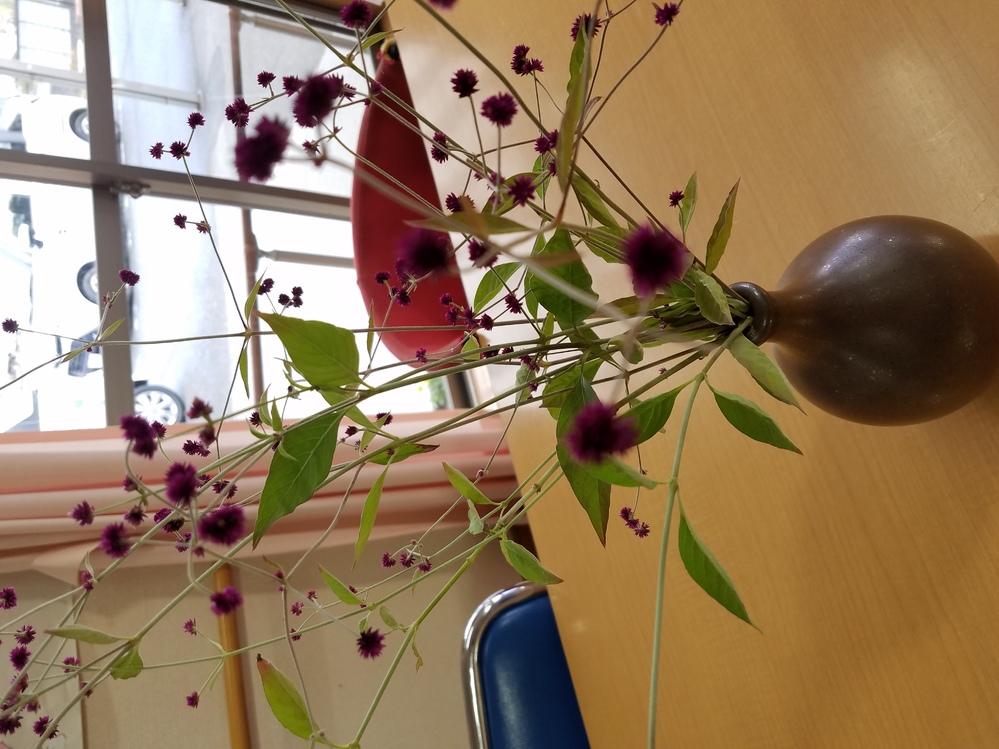 ちょっとぶれました 花なんでしょうか?なんて花ですか?