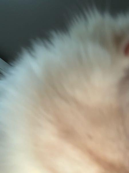 猫をiPhoneのインカメで撮っていて間違えてフラッシュをたいてしまいました、インカメなので外カメ結構な至近距離だったので心配です... 因みに、猫じゃらしも追いかけるし、元気に走り回ってはいます!