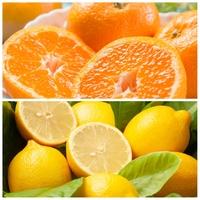 「みかん」と「レモン」どちらの方が好きですか?
