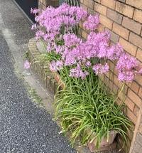 この花の名前を教えてください。とても綺麗な花 教えて下さい。