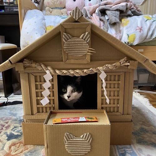 皆さんは初詣行きましたか? 僕はお家で猫さん神様にお参りして チュールをお供えしました ご利益ありますよね?