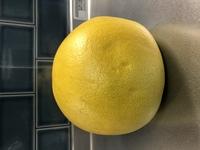 この柑橘系の果物の種類を教えていただけないでしょうか? 直径12cm、高さ12cmで大きいです。 頂き物なんですが、くれた方も何か分からなかったようで「何かと何かを掛け合わした品種らしい」と仰っていました。...