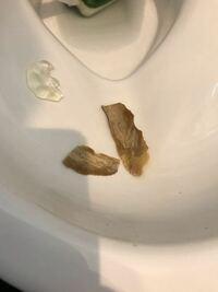 トイレ掃除をしていたら底の方に何かあると思って引っ張り出してみたらこんな物が出てきました。 厚さは0.5ミリくらい、大きさは6センチくらい。 石のように硬い。 新築2年半くらいです。 これは何でしょうか?