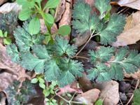 野草について質問させて頂きます。 これは何という植物でしょうか?