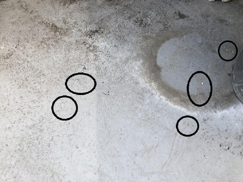 ベランダに落ちている糞ですが、これは何のふんでしょうか?白と灰色、ほぼ白色で1cm弱です。夜行性と思いますが。。。