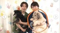 犬種に詳しい方お願い致します。  こちらの写真の櫻井君が抱いている犬は なんという種類の犬でしょうか?  分かる方お教え下さい。