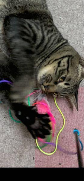 緊急です。 おもちゃを探してます。見づらくてすみません。 猫のおもちゃを探しているのですが見つからなくて… 紐は虹色でピンクのねずみです。