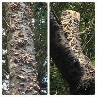 キノコの種類 写真のキノコについて 種類が分かる方、ご教示ください。  昨日福岡県で撮影したものです。 ※ 食用にするつもりはありません。