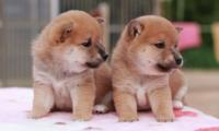 旦那さんと犬どちらが可愛いと 思いますか?