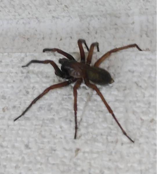 この蜘蛛はなんという蜘蛛ですか?