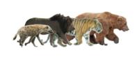 ライオンやトラは自然界ではどう言った存在ですか?