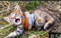 猫の悪質なヤラセ動画についてです。 以下のような動画を報告し削除させる方法はありますか?  先日、YouTubeで以下の動画を拝見しました。 https://youtu.be/fYOo99NJoiM 「rescure animals」というチャンネル内にはこの動画以外にもヤラセと疑われる動画がいくつか存在します。  誤解を招くので言っておきますと、 私は世話をしているなら、ヤラセの動画で猫を...