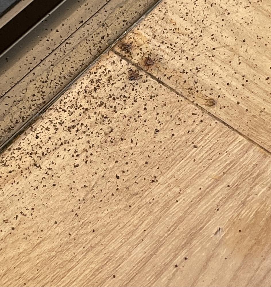 部屋の中の窓際に粉っぽいものがありました。木くずですか?何かの糞でしょうか?糞であれば何の虫か教えてください。