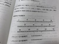 DNA塩基配列、PCR法です。 問5なのですが、答えが10塩基から115の塩基です。 私は、26塩基からにしたのですが、 解説を読んでも分かりません。 解説お願いします。