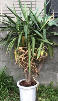 植物にお詳しい方よろしくお願い致します  この植物は何でしょうか? 育ててやりたいのですが種類等わかりません。