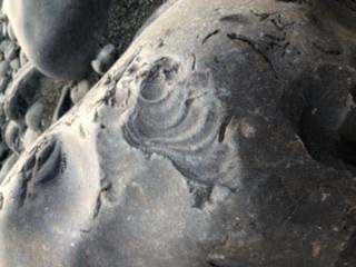 これは化石ですか? 専門家の方、鑑定を宜しくお願い致します。