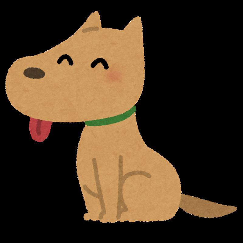 犬を飼ってる方に質問があります ・散歩は1日何回行きますか? ・雨や雪の日も散歩しますか? ・猫みたいに犬も吐きますか?