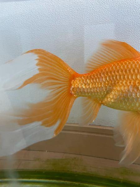 尻尾が白くなっているのですが、これはなんですか?