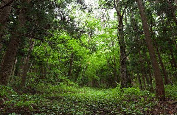 森の中に自然生成される、局所的に木が生えてなく空がよく見えるような空間のことをなんて言いましたっけ?よくアニメなどでも描かれてる印象があります。