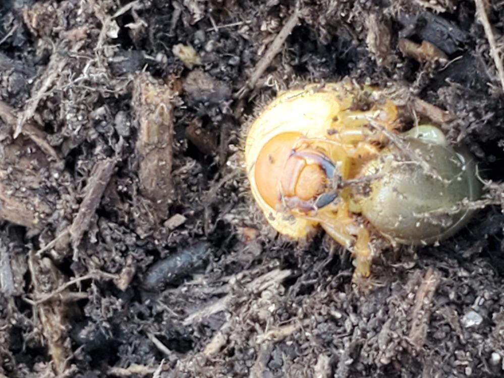 この幼虫何ですか?