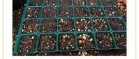 セルトレイに種まきした場合 (プランターに植える時) 1つずつ取る時に どのように取れば良いのですか?