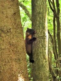 6月中旬、佐賀県多良山系で遭遇した動物の子供のようです。この動物の名前と子供なのかをご教示ください。よろしくお願いいたします。