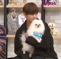 こちらの犬の犬種を教えてください。 ※韓国の番組ですので、お嫌いな方はごめんなさい。犬に罪はないのでお許しください。 画像の元動画はこちらです。 https://youtu.be/6C6DEm4U4ig