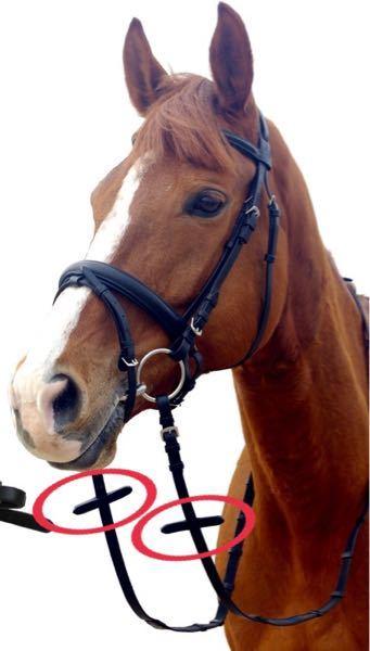 乗馬で、馬に乗る時の手綱についている、 これ(写真の赤マル部分)は、 何に使うのですか? 手綱を持つ時の補助?で 一緒ににぎるものですか? それともほかの馬具をつける際に 使用するものですか??