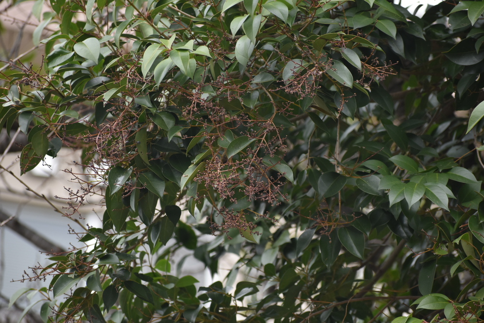 この木の名前を教えてください。 実がなっていたようですが、鳥が食べてしまったのか、ほとんどありません。