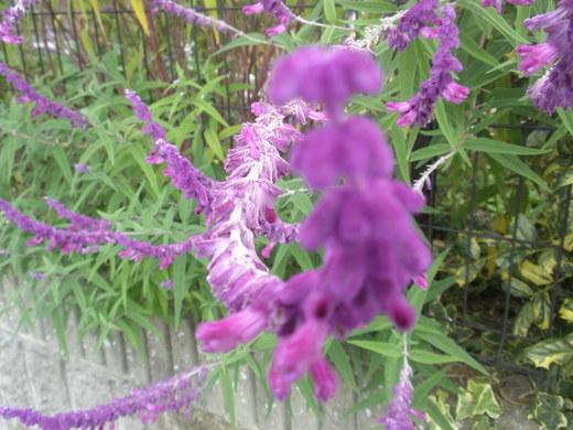 これってなんて言う花ですか?ネットで調べていたら見つけたんですけど、名前が分からなくて。分かる人、教えてください。