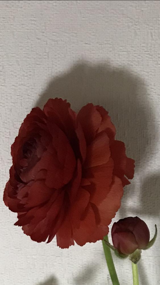 わかりにくい写真で申し訳ありません、 この花の品種をおしえていただきたいです、葉もとってしまいわかりにくいかもしれませんがよろしくお願いします