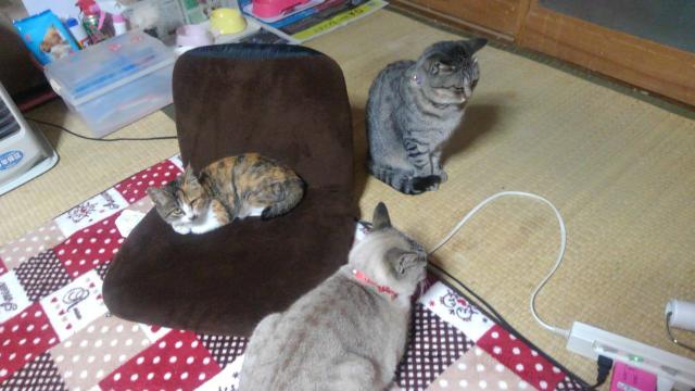 どの猫が好きですか