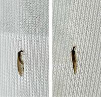 虫の名前を教えてください。 写真見にくいかもしれませんが、羽虫です。 薄茶色で胴が長め。  羽蟻?と思ったのですが、蟻の形はしていないような気がします。  名前が分かる方いましたら教えてください。 お願い...