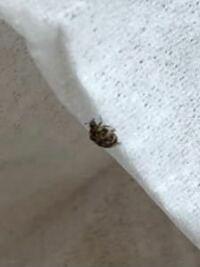 なんという虫ですか? 家にいたんですけど、気持ち悪くて不安です どうか教えてください。。