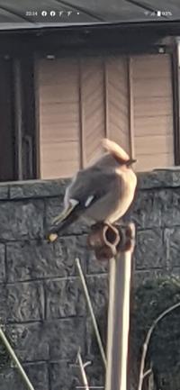 この鳥の名前はなんでしょうか? 握りこぶしより大きい鳥でした